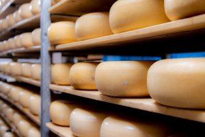 Geitenkaas op planken in het magazijn van Zorgboerderij De Klompenhoeve