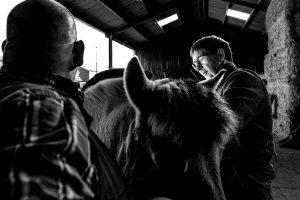 Dik borstelt een paard